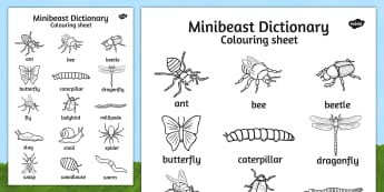 Minibeast Dictionary Colouring Sheet - colouring sheet, minibeast