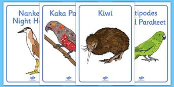 New Zealand Animals Display Posters - New Zealand Animals Display Posters, animals, New Zealand, display, poster, sign, kiwi, parakeet, gecko, skink, grey teal, parrot, paradise shelduck