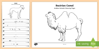 Arabian Animals Colouring Pages - Science, UAE, animals, living, world, Arabian, leopard, camel, falcon, oryx, saluki, lizard, sand, m