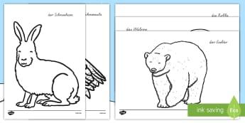 Polartiere Anmalbilder - Polargebiet, Winter, Wintertiere, Arktis, Anmalbilder,