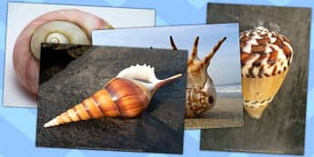 Shells Photo Pack - shell, photo pack, photos, pack, shells