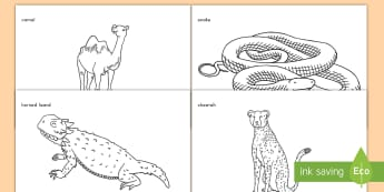 Desert Animals Coloring Activity Sheets - desert, animals, coloring, activity, worksheets, nature, geography, habitats,