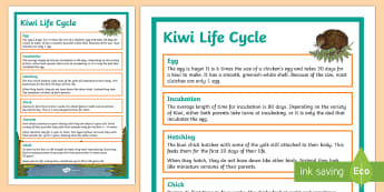 Kiwi Life Cycle Display Poster