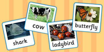 Vertebrates or Invertebrates Photo Cards - photos, displays