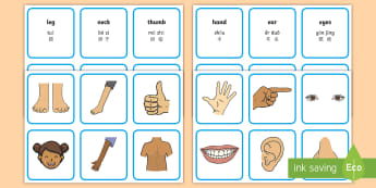 Parts Of The Body Word and Picture Matching Cards English/Mandarin Chinese/Pinyin - Parts Of The  Body Word and Picture Matching Cards - parts of the body word and picture matching car
