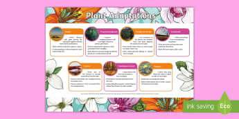 Plant Adaptations Display Poster  - ACSSU043, adapting, plant structures, pollination, tundra, rainforest, deciduous forest, coniferous