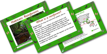 Rainforest Habitat PowerPoint - powerpoint, power point, interactive, powerpoint presentation, rainforest presentation, rainforest, rainforests, rainforests powerpoint, habitat, habitats, habitat presentation, habitat powerpoint, presentation, slide