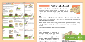 KS2 Pet Care of a Rabbit Differentiated Fact File - KS2, comprehension, reading, reading comprehension, reading activity, fact file, non fiction, nation