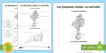 Ficha de actividad: Las funciones vitales - La nutrición - Autótrofo, heterótrofo, Autótrofa, heterótrofa, nutria, planta, patata, Respiración, Excreción