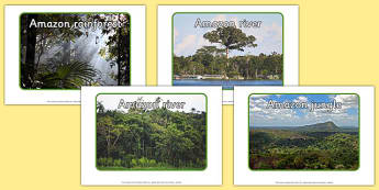 Editable Amazon Photos - editable, amazon, photos, rainforest, jungle, editable photos, edit
