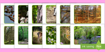 Woodland Creatures and Natural Objects Photo Pack English/Mandarin Chinese/Pinyin - Woodland Creatures and Natural Objects Photo Pack - photo, pack, 30 days wild, thirty days wild, oje