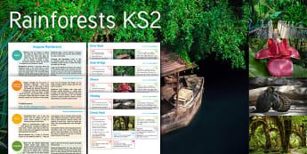 Imagine Rainforests KS2 Resource Pack - river, boat, rope, bridge, flower, monkey, forest, path