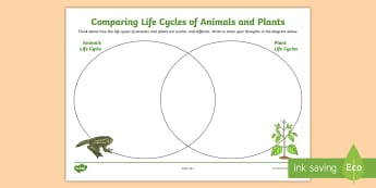 Comparing Plant and Animals Life Cycles Venn Diagram Activity Sheet - ACSSU072, lifecycles, year 4 science, grade 4 science, science writing,Australia