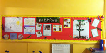 The Rainforest Display, Classroom Display, class display, rainforest, jungle, animals. geography, trees, Early Years (EYFS), KS1 & KS2 Primary Resources