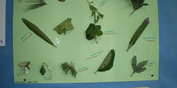 Plants Display, class display, Leaves, Science & investigation, Living things, Primary, Resources,Plants, Early Years (EYFS), KS1 & KS2 Primary Resources