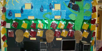 Plant Class Display, class display, Plants, Flowers, Display, Classroom Display, Children Display, Display, Early Years (EYFS), KS1 & KS2 Primary Resources
