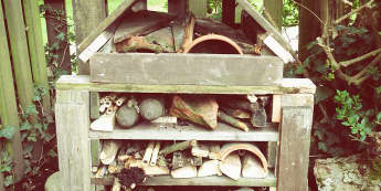 Minibeasts, Habitats, Creatures, Home, Homes, Wood, Logs, Stone, Wood, Display, Classroom Display, Early Years (EYFS), KS1 & KS2 Primary Teaching Resources
