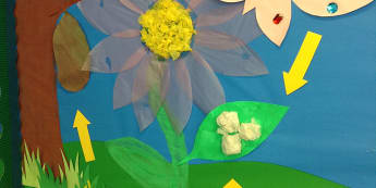 Minibeasts, Life Cycle of a Butterfly, Butterflies, Flowers, Plants, Display, Classroom Display, Early Years (EYFS), KS1 & KS2 Primary Teaching Resources