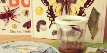 Minibeasts, Life Cycle of a Butterfly, Butterflies, Flowers, Wheel, Display, Classroom Display, Early Years (EYFS), KS1 & KS2 Primary Teaching Resources