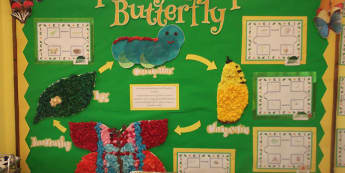 Minibeasts, The Cycle of a Butterfly, Butterfly, Caterpillar, Cycles,  Display, Classroom Display, Early Years (EYFS), KS1 & KS2 Primary Teaching Resources