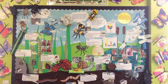 Minibeasts, Ladybird, Worm, Slug, Bee, Earwig, Caterpillar, Spiders, Display, Classroom Display, Early Years (EYFS), KS1 & KS2 Primary Teaching Resources