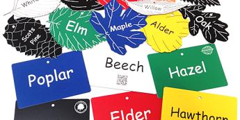 Tree classification leaves