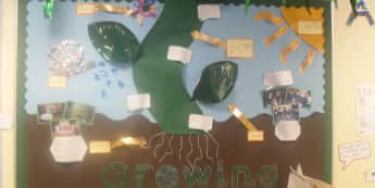 Plants Display, classroom display, class display, Plants, flowers, growth, growing, planting, bean stalk, Early Years (EYFS), KS1 & KS2 Primary Resources