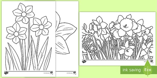 Daffodil Colouring Sheet Teaching Resource Twinkl