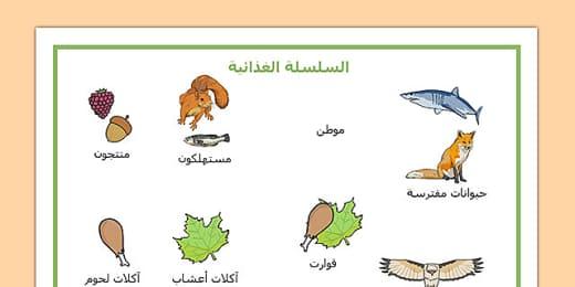 بطاقات مفردات السلسلة الغذائية علوم