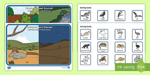 Diurnal Animals by Third Line Clip Arts   Teachers Pay Teachers