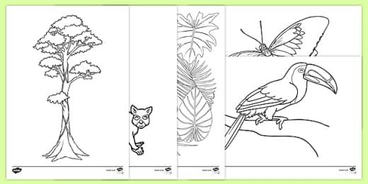 FREE! - Jungle & Rainforest Coloring Sheets (teacher Made)