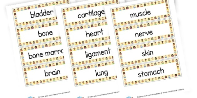 How Humans Work - Body Vocabulary Cards - KS2 Science, The Human Body, My Body, Skeleton, Organs, Worksheets
