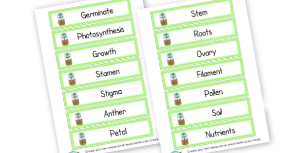 Plants Word Cards - Plants & Growth Display Primary Resources, flowers, growing