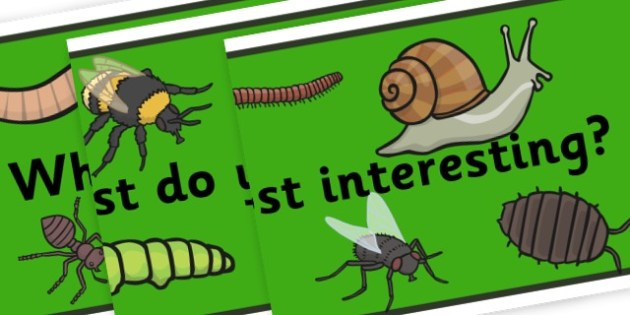 What Minibeasts Do You Find Most Interesting? Banner - Minibeasts Display Primary Resources, minibeast, bugs, life cycles