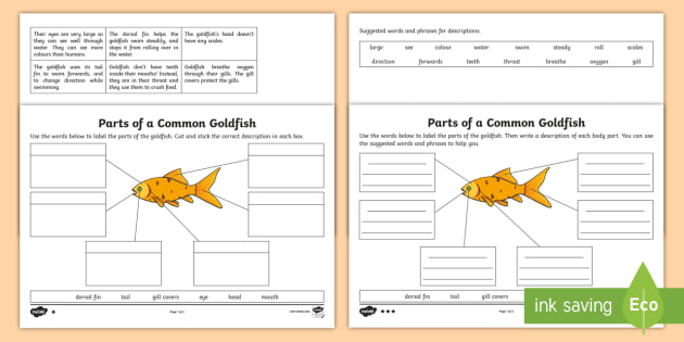 as well Free Worksheets Liry   Download and Print Worksheets   Free on also Label the pet   parts of a pet animal worksheet   Animal needs  pet further New Page 1 likewise Parts of a Goldfish Differentiated Worksheet   Activity Sheet furthermore Coloring Parts Worksheet Parts Of The Coloring Pages For besides Awesome Collection Of Parts Worksheet for Kindergarten Math furthermore fish math worksheets – scottishotours info also Fish Anatomy Worksheet The best worksheets image collection furthermore Goldfish Parts Diagram Shrimp Parts Diagram   Wire Diagrams moreover Fish Parts Worksheet for Kindergarten New Great White Shark also Worksheets Parts Of The For Kindergarten Fish Worksheet moreover Enchanting Fish Parts Worksheet For Kindergar on Unit Ideas in addition Fish Parts Worksheet   Turtle Diary additionally Fish parts worksheet for kindergarten  832040   Myscres further Bony Fish Anatomy Worksheet Best Of Fish Internal Diagram Fish Free. on parts of a fish worksheet