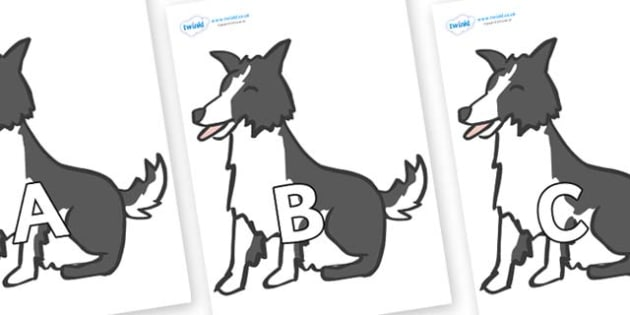 A-Z Alphabet on Sheep Dogs - A-Z, A4, display, Alphabet frieze, Display letters, Letter posters, A-Z letters, Alphabet flashcards