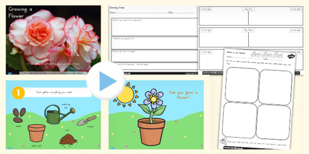 Growing a Flower Task Setter Activity PowerPoint with Worksheet