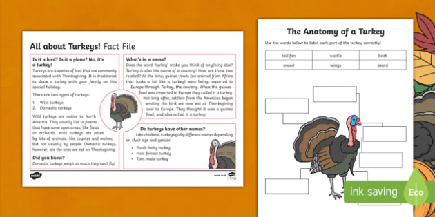 All About Turkeys Fact File and Activity Sheet