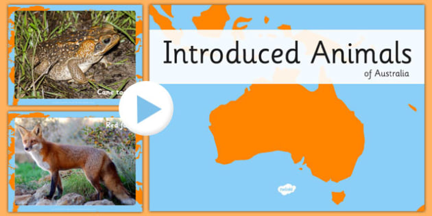 Introduced Animals in Australia PowerPoint - australia, introduced, animals, powerpoint