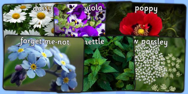 Wild Plants Display Photos - wild plants, display, photo, photos