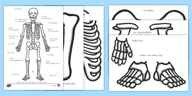 NEW * Skelett zum Ausschneiden - Körperteile, Körper