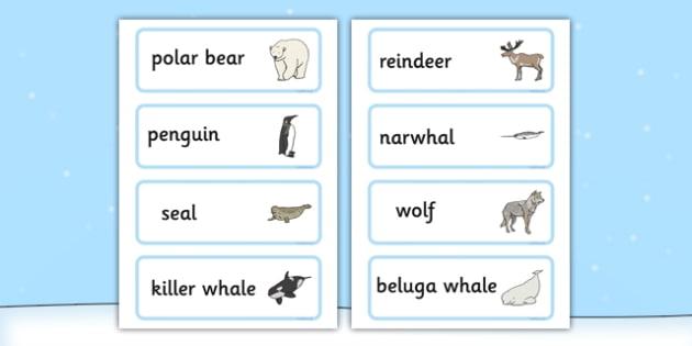 Polar Animals Word Cards - Polar, Animal, Ice, Word, Cards
