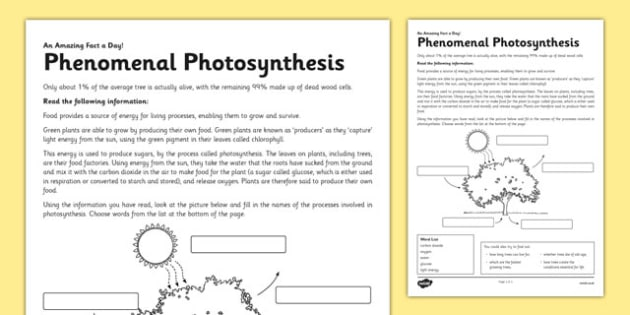 Phenomenal photosynthesis worksheet activity sheet phenomenal photosynthesis worksheet activity sheet photosynthesis green plant tree energy ccuart Gallery