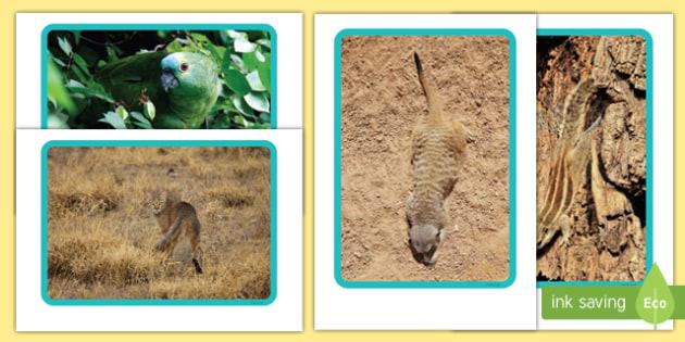 Animal Camouflage Display Photos