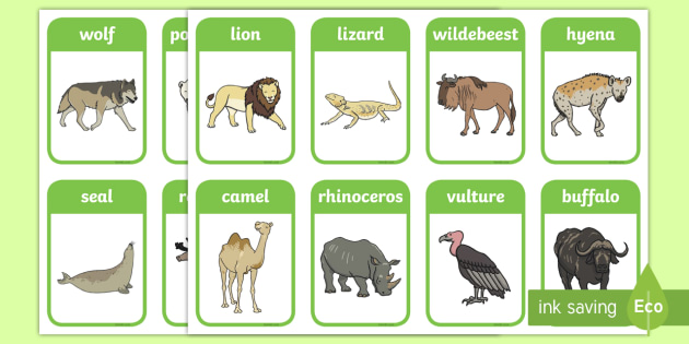 picture about Zoo Animal Flash Cards Free Printable called Animal Flashcards