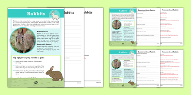 Rabbit Differentiated Reading Comprehension Activity - rabbit, differentiated, reading, comprehension, activity