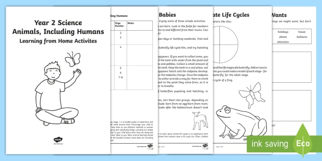 Year 2 Science Animals Including Humans Learning from Home Activity Booklet - Key Stage 1 Science Learning from Home Activity Booklets