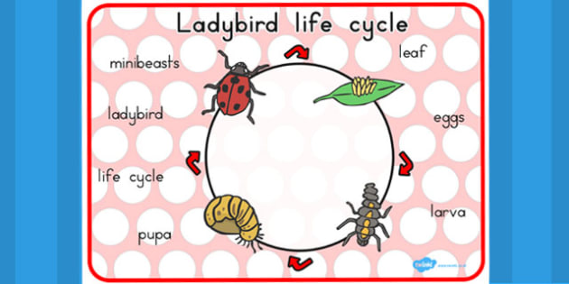 Ladybird Life Cycle Word Mat - visual aid, keywords, writing aid