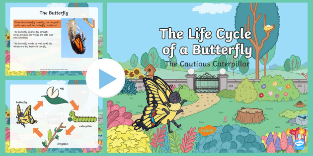 The Cautious Caterpillar: Life Cycle of a Butterfly PowerPoint