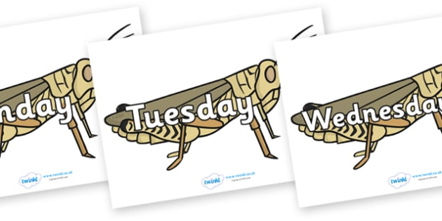 Days of the Week on Grasshoppers - Days of the Week, Weeks poster, week, display, poster, frieze, Days, Day, Monday, Tuesday, Wednesday, Thursday, Friday, Saturday, Sunday